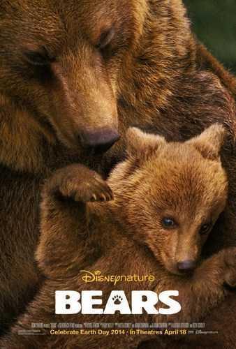 Bears [BD25][Latino]